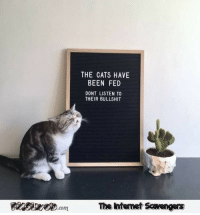 <p>Daily memes and funny pics  Tuesday funnies collection  PMSLweb </p>: THE CATS HAVE  BEEN FED  DONT LISTEN TO  THEIR BULLSHIT  The Intemet Scavengers <p>Daily memes and funny pics  Tuesday funnies collection  PMSLweb </p>