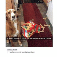 Cats, Memes, and Tumblr: The cats spilled his treats, and he thought he was in trouble.  tastefully offensive:  I was framed, honest. (photo by frisky dingos) { funnytumblr textposts funnytextpost tumblr funnytumblrpost tumblrfunny followme tumblrfunny textpost tumblrpost haha shoutout}