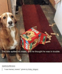 """friskies: The cats spilled his treats, and he thought he was in trouble.  tastefully offensive:  l """"I was framed, honest. (photo by frisky dingos)"""