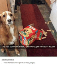 """Cats, Humans of Tumblr, and Thought: The cats spilled his treats, and he thought he was in trouble.  tastefullyoffensive  """"I was framed, honest."""" (photo by frisky_dingos)"""
