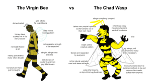 Virgin, Bears, and Flowers: The Chad Wasp  The Virgin Bee  VS  stings everything for sport  gets btfo by  fat stupid bears  domesticated  other bugs copy  takes over people's picnics  it's colorscheme to  cucks humans out of  ward off predators  drab yellow,  boring pattern  their own meal  honey slave  cucked out of it's  wild  own produce  not aggresive enough  to be respected  bright yellow,  creative pattern  not really feared  at all  big stinger, will  use it however many  times necessary  stinglet, stings once  feared and respected  by everyone  and dies  nearly goes extinct  every other decade  eats scraps of  nectar it gets from  gay little flowers  is the natural upgrade  over both bees and ants  knows humans resort to  hornets hunt them  extreme methods to try and  remove their nests,  builds them anyway  just for laughs  eats other insects,  on top of the bug foodchain The Virgin bee vs. the Chad wasp