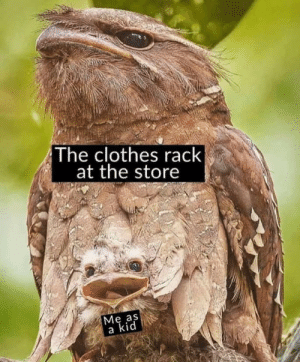 Meirl: The clothes rack  at the store  Мe as  a kid Meirl