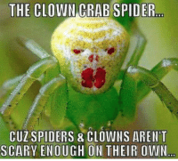 .: THE CLOWN CRAB SPIDER  CUZ SPIDERS & CLOWNS ARENT  SCARY ENOUGH ON THEIR OWN .