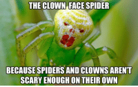 Mother nature strikes again: THE CLOWN FACE SPIDER  BECAUSE SPIDERS AND CLOWNSARENT  SCARY ENOUGH ON THEIR OWN Mother nature strikes again