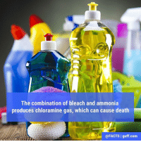Memes, 🤖, and Deaths: The combination of bleach and ammonia  produces chloramine gas, which can cause death  @FACTS guff.com It can also cause death's less evil cousins: coughing, choking, and lung damage, but also... DEATH!