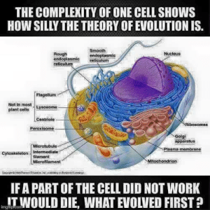 Memes, Smooth, and Work: THE COMPLEXITY OF ONE CELL SHOWS  HOW SILLY THE THEORY OF EVOLUTION IS.  Smooth  endoplasmic  Nucieus  Rough  endoplasmic reticulum  reticulunm  Flagellum  Not in  plant cells Lysosome  leontriolo-  Peroxisome  Ribosomes  Golgi  apparatus  Microtubule  Plasma membrane  Cytoskeleton Intermediate  filament  Microfilament  Mitochondrion  IFA PART OF THE CELL DID NOT WORK  mgITWOULD DIE, WHAT EVOLVED FIRST ?
