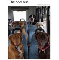 "Bitch, Bless Up, and Fresh: The cool bus.  @DrSmashlove  EMERGENCY DOOR WHEN I WAS IN SCHOOL AND SCHOOL CAME BACK IN SESSION I WAS THE DOGGO IN THE BACK. CHEESING HARD AS A BITCH 😂. READY TO TAKE ON THE WORLD LIKE ""time to get these A's ☺️"" IN MY FRESH HAIRCUT AND PAYLESS JORDANS. DAMN I WAS NERDY LOL. MY JORDANS REAL NOW THO. ALL OF EM 😂. MORAL OF THE STORY IS THAT SHIT PAID OFF THANK YOU LORD BLESS UP 😍😂😂😂"