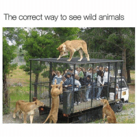 True true @questifying: The correct way to see wild animals True true @questifying