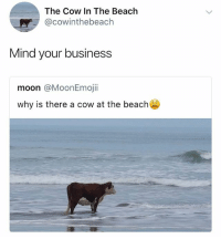 Crazy, Grandma, and China: The Cow In The Beach  @cowinthebeach  Mind your business  moon @MoonEmojii  why is there a cow at the beach my grandma crazy as fuck screaminf that she wanna gon back to china