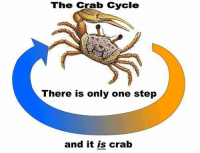 The Crab cycle  There is only one step  and it is crab