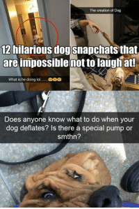 12 hilarious dog snapchats that are impossible not to laugh at! Read the full story here 👉 https://1jux.net/627201/70232: The creation of Dog  hilarious dogsnapchats that  areimpossible mot to laughat  12  What is he doing lol  Does anyone know what to do when your  dog deflates? Is there a special pump or  smthn? 12 hilarious dog snapchats that are impossible not to laugh at! Read the full story here 👉 https://1jux.net/627201/70232