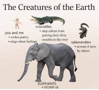 Dank, Scream, and Dirty: The Creatures of the Earth  crocodiles  stop zebras from  you and me  putting their dirty  writes poetry  sings about mouths in the river  feelings  salamanders  scream if Seen  by others  ELEPHANTS  STOMP all here is every animal we know about so far, and what they do