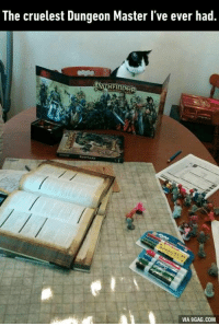 When you have no friends and you have to play board game with your cat. http://9gag.com/gag/a77pG02?ref=fbp: The cruelest Dungeon Master l've ever had.  HFINDER  SATH  VIA 9GAG.COM When you have no friends and you have to play board game with your cat. http://9gag.com/gag/a77pG02?ref=fbp