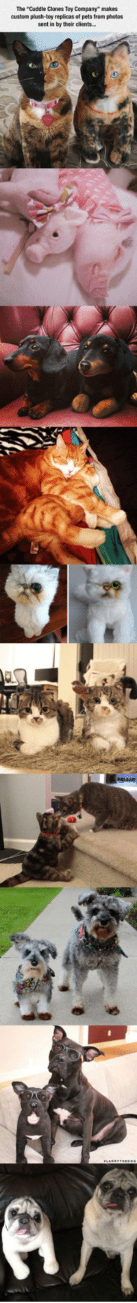"""Pets, Company, and Photos: The """"Cuddle Clones Toy Company"""" makes  custom plush-toy replicas of pets from photos  sent in by their clients. <p>This Company Makes Plush Toy Copies Of Your Pets.</p>"""
