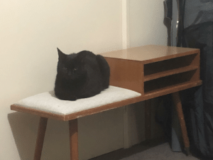 The cursed cat has a new spot to ponder. Happy Friday the 13th: The cursed cat has a new spot to ponder. Happy Friday the 13th