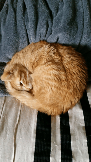the-cute-kitten:  This is my gfs cat Tupac. He was going to turn 1 next month. RIP little dude.: the-cute-kitten:  This is my gfs cat Tupac. He was going to turn 1 next month. RIP little dude.