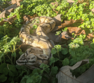 The cutest danger noodle in the West: The cutest danger noodle in the West