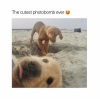 Memes, Photobomb, and Tbt: The cutest photobomb ever Would you like to advertise your business, your talent, a funny video or something else on my page? 🆗🆒🆕DM me for very cheap rates.😎😎😎See great results💯💯💯 ❤❤SHOUT OUT Sunday SALE 🌏🌎PayPal only💰💰💰✔✔✔ Go subscribe to my YouTube @mutebitch2😎😎😎 🚘FREE £10 FOOD 🚘FREE £10 FOOD 🚘FREE 🆕🆕🆕🆕🆕CentralDish CentralDish Centraldish £10 OFF your first takeaway order GO TO: Centraldish.com-signup and add the reward code MICH6703 at the checkout page. FREE RIDE 🚘 FREE RIDE🚘 FREE RIDE Need a taxi? Have you tried Uber? Use my promo code MUTEDOG2 for your first ride on me❤❤❤ Click the link in my bio😎 🚘FREE🚘FREE 🚘FREE 🚘FREE🚘 🆕GETT GETT GETTAXI 🚕🚕🆓🆓 Use my code GTESXCT for £5 off your first taxi ride.🆒 Get the app: http:-invitev-uk.gett.com-code-GTESXCT🚕🚕 🚘FREE🚘FREE 🚘FREE 🚘FREE🚘 mutebitch2 uber GETT cabs food 2017 instagramstories love tbt repost cute me instagood followme summer instadaily happy photooftheday me like4like friends selfie girl fun art tags4likes smile follow mutebitch3