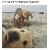 "<p>Hey fren ready for my closeup? via /r/memes <a href=""http://ift.tt/2quqXlq"">http://ift.tt/2quqXlq</a></p>: The cutest photobomb of all time <p>Hey fren ready for my closeup? via /r/memes <a href=""http://ift.tt/2quqXlq"">http://ift.tt/2quqXlq</a></p>"