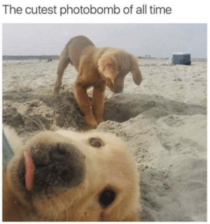 Photobomb, Time, and All: The cutest photobomb of all time