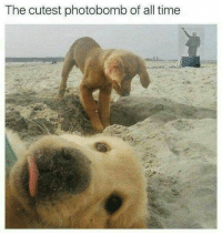 The cutest photobomb of all time Cheer up proles its almost Friday
