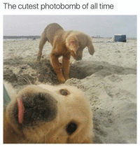 Memes, Photobomb, and Time: The cutest photobomb of all time https://t.co/ddBEKg4x8R