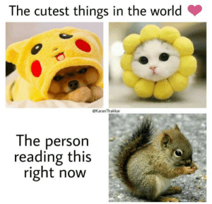 The cutest things in the world: The cutest things in the world  @KaranThakkar  The person  reading this  right now The cutest things in the world