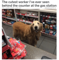"""YES PLEASE I'LL TAKE $40 OF PREMIUM ON PUMP 6, ONE PACK OF BACKWOODS, TWO BOTTLES OF HONEST """"Unsweet"""" PEACH GINGER ICE TEA AND ONE LARGE BOOP BLESS UP THANK YOU 🤗❤️😍😂: The cutest worker I've ever seen  bernind the counter at the gas station  Pic: reddit u/pets and pot  @DrSmashlove YES PLEASE I'LL TAKE $40 OF PREMIUM ON PUMP 6, ONE PACK OF BACKWOODS, TWO BOTTLES OF HONEST """"Unsweet"""" PEACH GINGER ICE TEA AND ONE LARGE BOOP BLESS UP THANK YOU 🤗❤️😍😂"""
