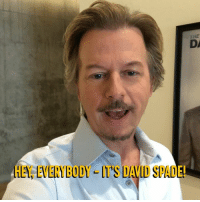 When something stupid happens in pop culture, David Spade will be there (with his new late-night show).: THE  DA  HEY, EVERYBODY IT'S DAVID SPADE! When something stupid happens in pop culture, David Spade will be there (with his new late-night show).
