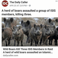 Isis, Memes, and Wild: The Daily Caller  EDC  APR 25 AT 2:01PM  A herd of boars assaulted a group of ISIS  members, killing three.  Wild Boars Kill Three ISIS Members In Raid  A herd of wild boars assaulted an Islamic...  daily caller com Squeal Team Six