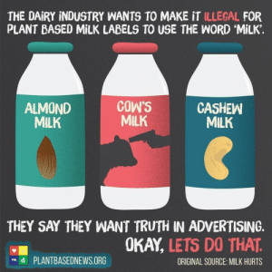 "Animals, Apparently, and Bad: THE DAIRY INDUSTRY WANTS TO MAKE IT ILLEGAL FOR  PLANT BASED MILK LABELS TO USE THE WORD MILK.  COW'S  MILK  CASHEW  MILK  ALMOND  MILK  THEY SAY THEY WANT TRUTH IN ADVERTISING.  OKAY, LETS DO THAT  PLANTBASEDNEWS.ORG  ORIGINAL SOURCE: MILK HURTS  PBN thebluehue22:  dairyisntscary: champawattigress:  agro-carnist:  sebbysheepie:  I fully agree with giving nut milks a new name. Because they can be confused with dairy milk and for those of us with nut allergies it could be deadly over those that just have lactose intolerance and have a bad stomachache. However making a label showing you killing a cow don't make sense as dairy wouldn't be giving milk if they where shot.. mind you if your trying to say that dairy is evil then you should also point out the issues with the nut milks as well. A large poison symbol perhaps for those of us that it would kill. Or the ""may cause cancer"" on the fortified ones.   Apparently when you shoot a calf in the head, milk comes out instead of blood and brain matter. Who knew?  So, should we also change the cashew milk bottles pic so that it better represents the atrocious conditions of the workers who have to shell each nut by hand? Maybe a cigarette box style image of their mangled blistered palms? Or just some text to let people know that these people (mostly women) are often paid as little as two pounds a day for their labour? Or are y'all just totally transparent about how little of a shit you give about people nowadays?  MoSt cAsHewS sRe fEd tO liVesToCk dOnTcHa kNow  vegans only care about animals, not the horrible conditions HUMAN WORKERS ARE PUT THROUGH.  A lot of them are also really shit at caring about animals if we're being honest."