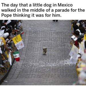 Pope Francis, Target, and Tumblr: The day that a little dog in Mexico  walked in the middle of a parade for the  Pope thinking it was for him porlasbarbasdeclotario:  catwithbenefits:  hand: it WAS for him   This also happened in Santiago de Chile. The dog thought everyone was there to see him.