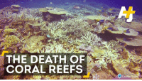 Bad news: This is the worst coral die-off ever recorded.: THE DEATH OF  CORAL REEFS  Coral Reef Studes Bad news: This is the worst coral die-off ever recorded.