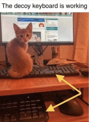 How To, Keyboard, and How: The decoy keyboard is working How to maintain productivity as a cat owner