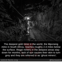 """Stay Down: The deepest gold mine in the World, the Mponeng  mine in South Africa, reaches roughly 2.4 miles below  the surface. Illegal miners in the deepest areas stay  down for months; lack of sun causes their skin to turn  grey and they are referred to as """"ghost miners'.  weird-facts org  @facts weird"""