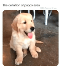 "Bless Up, Lmao, and Memes: The definition of puppy eyes  @DrSmashlove Okay puppo. No problem. Take my chimken leg. You deserve it 😊 [""wowwwwww Mr. 'Dog Lover' THAT 👏 DOG 👏 CAN 👏 CHOKE 👏. Terrible a$$ human 😤."" OKAY DONT WORRY ABOUT SMASH I PICK THE RIGHT BONE STRUCTURE BEFORE I HAND IT TO A PUPPO I AM VERY SCIENTIFIC ABOUT ASSESSING SMOOTHNESS FOCUS ON YA OWN PUPS IT'S NOT DARK CHOCOLATE WE GOOD LMAO BLESS UP 😍😂😂]."