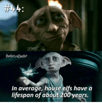 Elf, Gryffindor, and Memes: the diatyopotter  In average, house elfs have a  lifespan of about 200 years. Comment '😍' if you knew this and '😮' if you didn't! harrypotter thechosenone theboywholived gryffindor dobby houseelves hogwarts jkrowling harrypottercasts harrypotterfan harrypotterfilm harrypotterfact harrypotterfacts • Potterheads⚡count: 54,348
