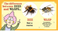 Bees: The difference  between  BEES  and  WASPS...  BEE  Not a  meme  WASP  Completely  different insect  but still not  a meme
