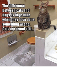 """Memes, 🤖, and Cats and Dogs: The difference  between cats and  dogs, is Dogs hide  When they have done  Something wrong.  Cats are proud of it... """"Just showing off my work..."""""""