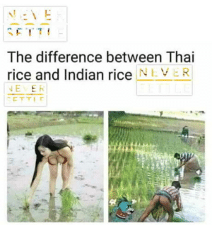 I love lice: The difference between Thai  rice and Indian rice NEVER  EER I love lice