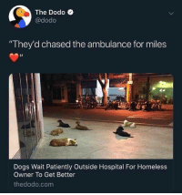 "Love and loyalty: The Dodo C  @dodo  ""They'd chased the ambulance for miles  Dogs Wait Patiently Outside Hospital For Homeless  Owner To Get Better  thedodo.com Love and loyalty"