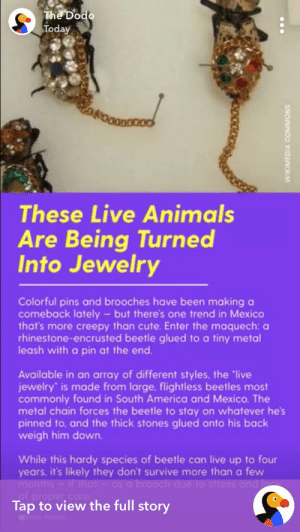 "This ""trend"" is TRASHY and needs to stop!: The Dodo  Today  These Live Animals  Are Being Turned  Into Jewelry  Colorful pins and brooches have been making a  comeback lately but there's one trend in Mexico  that's more creepy than cute. Enter the maquech: a  rhinestone-encrusted beetle glued to a tiny metal  leash with a pin at the end.  Available in an array of different styles, the ""live  jewelry is made from large. flightless beetles most  commonly found in South America and Mexico. The  metal chain forces the beetle to stay on whatever he's  pinned to, and the thick stones glued onto his back  weigh him down.  While this hardy species of beetle can live up to four  years, it's likely they don't survive more than a few  months-if that-as a brooch due to stress and l  of proper care  Tap to view the full story  WIKIMEDIA COMMONS This ""trend"" is TRASHY and needs to stop!"