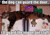 the dog  can guard the door.  Denise  ill guard the  importantstuff Good kitty. Smart kitty.