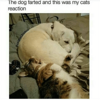 Cats, Cute, and Dank: The dog farted and this was my cats  reaction awe - ✿ qotp ↬ would you rather fart or burp at the worst times? (sorry idk anymore 😂) - accurate clean cleanmeme cleanmemes comedy cute dank dankmeme dankmemes funny ha haha hilarious kawaii kawaiimeme kawaiimemeteam lol me meme memes omg pun puns relatable tbh true tumblr tumblrpost tumblrposts wow