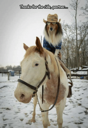 The Dog Horse Ride: The Dog Horse Ride
