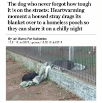@tanksgoodnews is exactly what it sounds like. You'll never see anything sad, negative, or political over there.: The dog who never forgot how tough  it is on the streets: Heartwarming  moment a housed stray drags its  blanket over to a homeless pooch so  they can share it on a chilly night  By lain Burns For Mailonline  10:21 12 Jul 2017, updated 12:52 12 Jul 2017 @tanksgoodnews is exactly what it sounds like. You'll never see anything sad, negative, or political over there.