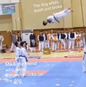 Could this be a new format ?: The dog who's  leash just broke  Me& my friend  who were  th rowing rocks on  the dog Could this be a new format ?