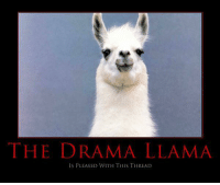 This mythical creature only shows up when saltiest of tears happen ..  ~cm: THE DRAMA LLAMA  IS PLEASED WITH THIS THREAD This mythical creature only shows up when saltiest of tears happen ..  ~cm