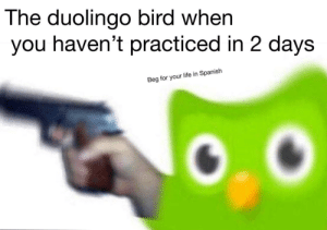 We noticed you haven't been practicing lately: The duolingo bird when  you haven't practiced in 2 days  Beg for your life in Spanish We noticed you haven't been practicing lately