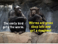 The early bird  Worms are gross  gets the worm.  sleep late and  et a doughnut The early bird gets the worm. Worms are gross, sleep late and get a doughnut             LOL   #chimpanzees